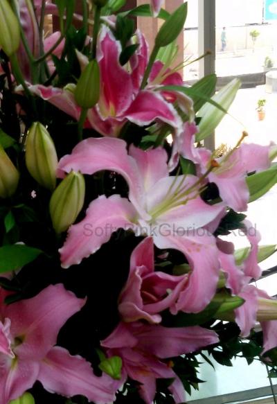 Lillies 4